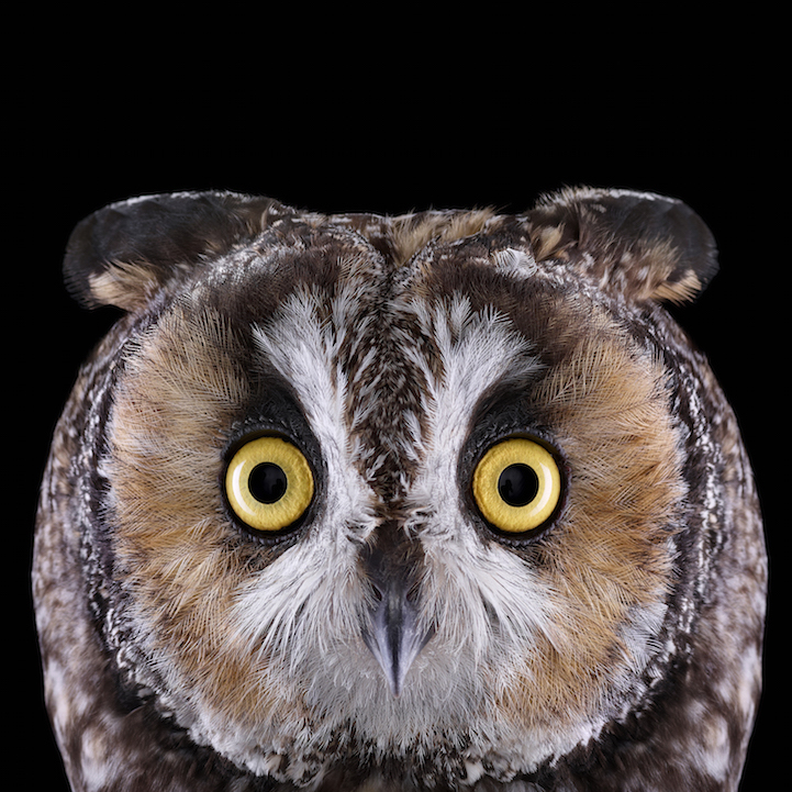 Stunning Portraits Of Owls Captured In Up Close Detail
