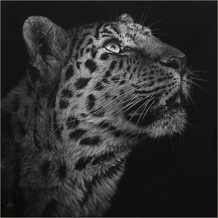 Photo Realistic Wild Animal Scratchboard Art