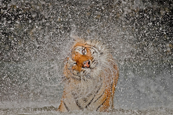 Incredible Animal Photos In 2012 National Geographic Photography Contest