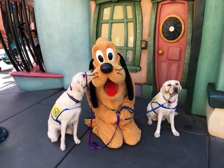 Happiest Place On Earth For Service Dogs