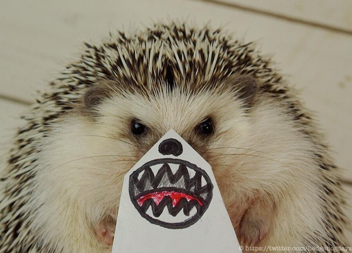 Marutaro, the Pygmy Hedgehog, Poses With Creative Illustrated Masks