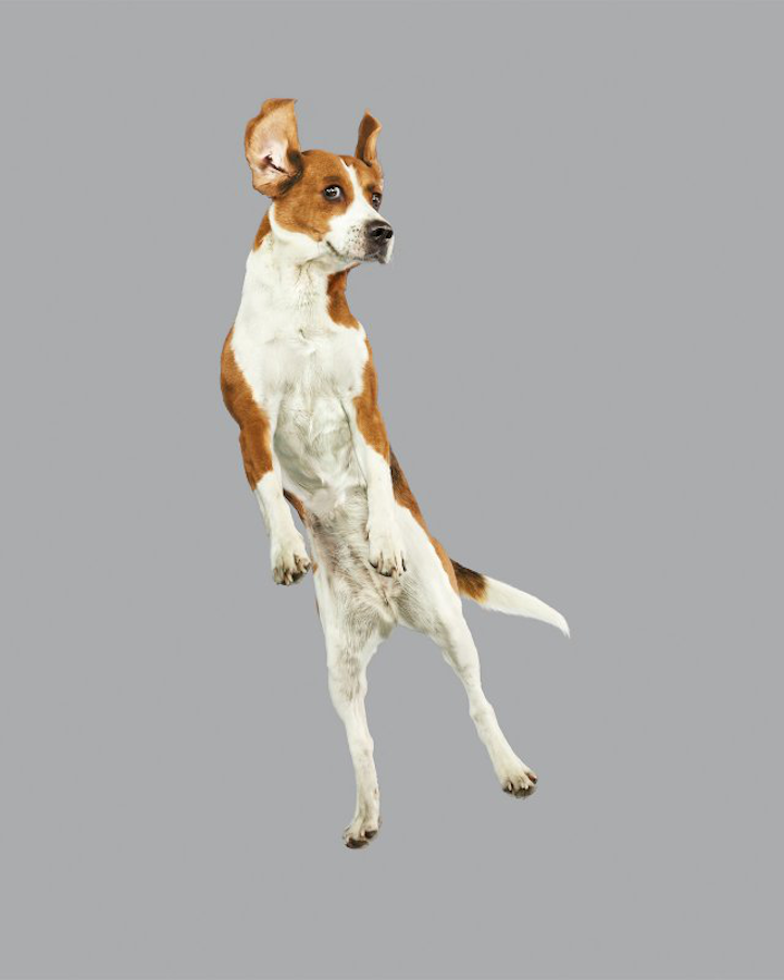 Hilarious Portraits Of Cute Dogs Floating In MidAir - Hilarious photographs dogs floating mid air