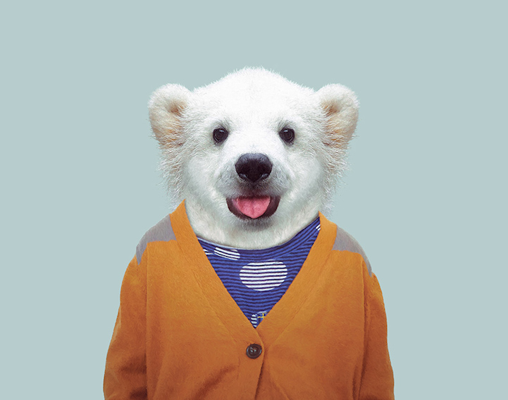 yago partal baby animal portraits animals dressed like humans polar bear