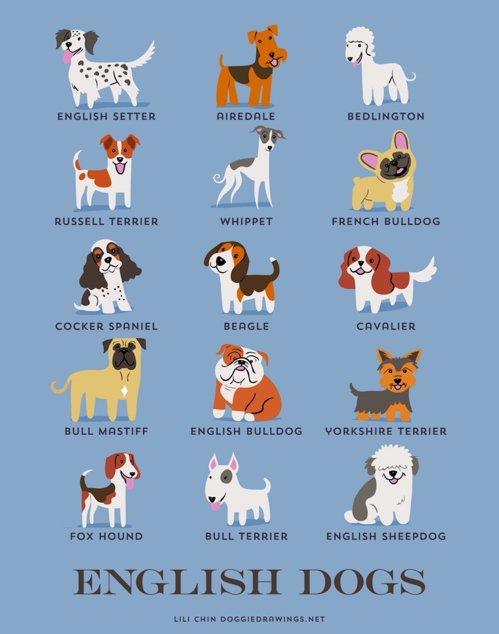 Delightful Illustrated Posters Are A Guide To 192 Dogs Of The World