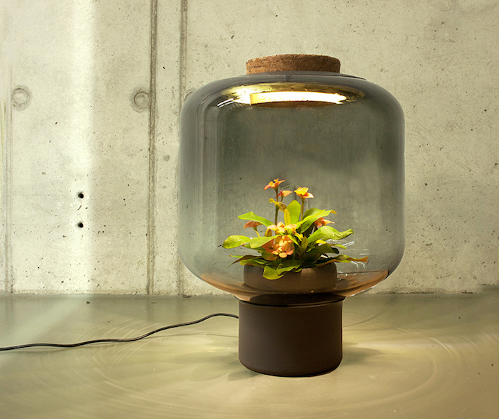 Ingenious Lamps Allow Plants To Grow Indoors Without Direct Sunlight Or Water