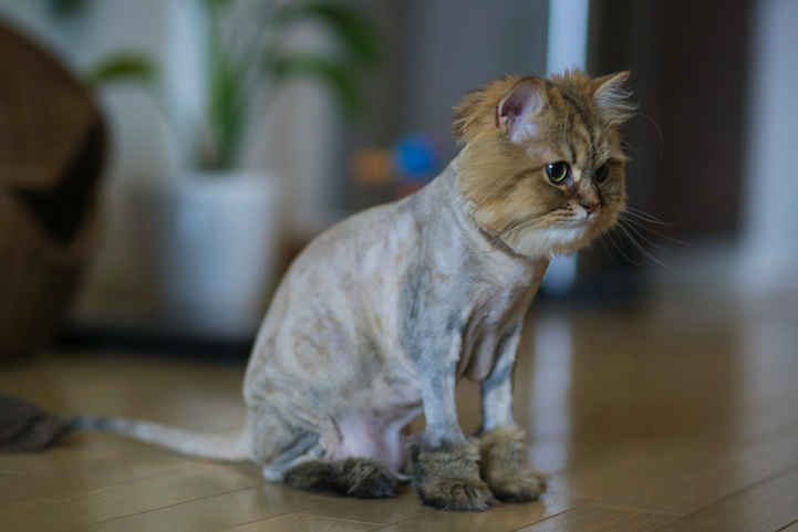 Why Do Cats Get Matted Fur