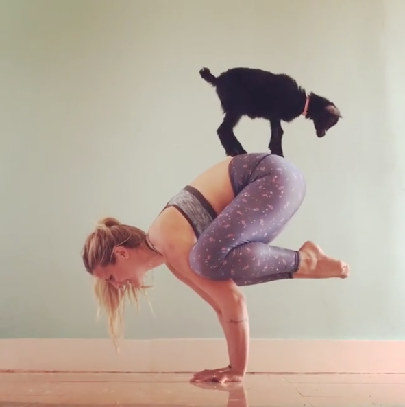 Quot Yoga Girl Quot Partners Up With Adorable Baby Goat To Achieve