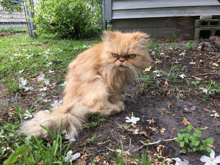 Homeless Cat Found On Vacant Property Charms His New Rescuers With His Grumpy Face