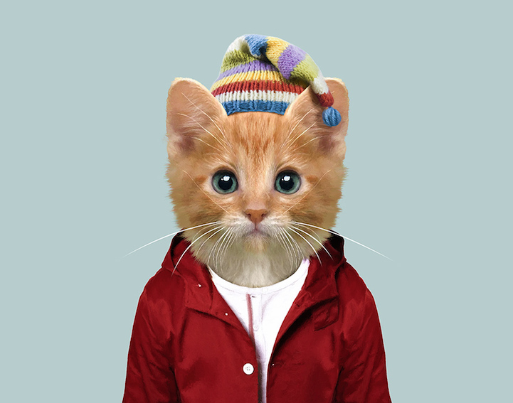 yago partal baby animal portraits animals dressed like humans cat