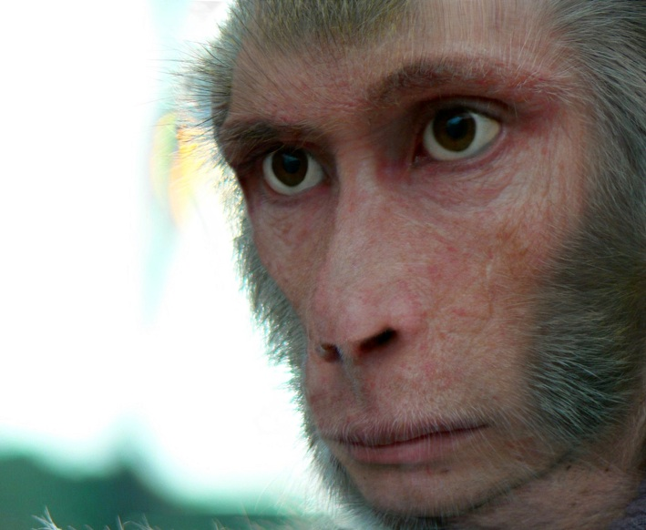 Pic of the Day: Ridiculously Believable Monkey Man