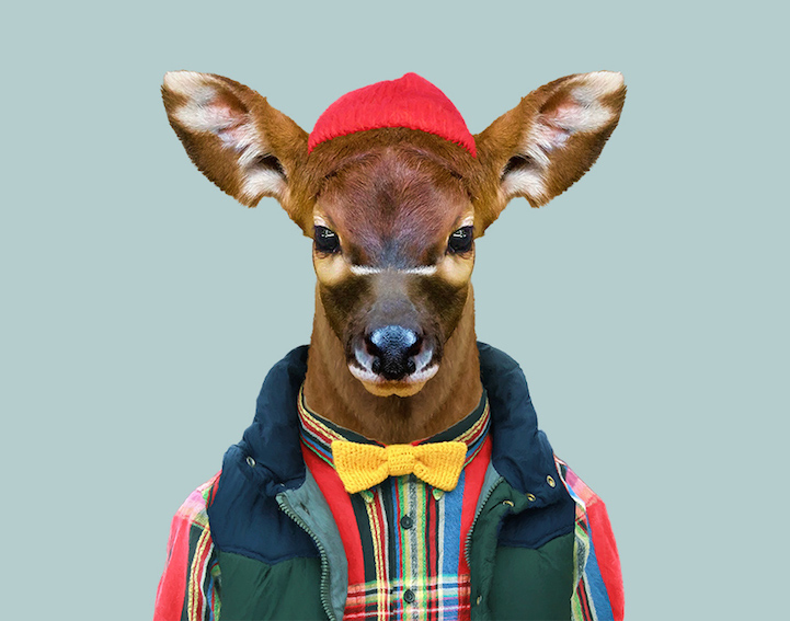 yago partal baby animal portraits animals dressed like humans bongo